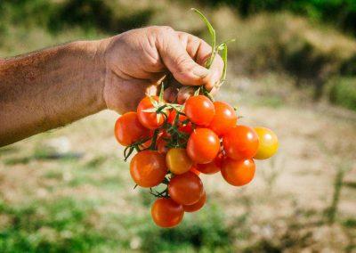 prodotti-azienda-agricola-malapezza-a